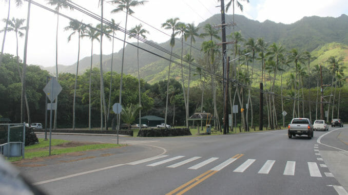 Hawaii road with palms